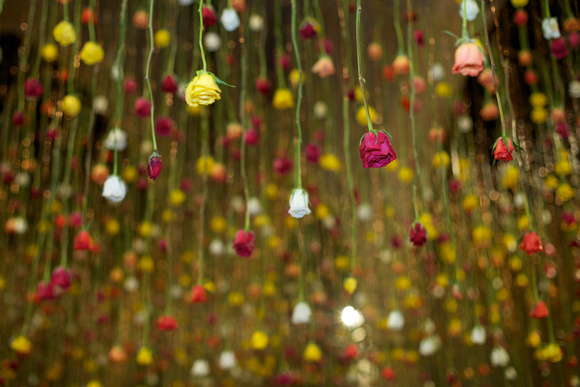 Floriculture Opening Garden Museum, Rebecca Louise Law, Roses, 2013.